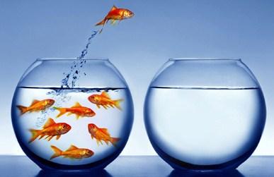 foto-goudvis-die-springt